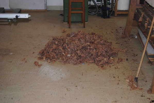 Pile of wood shavings after planing